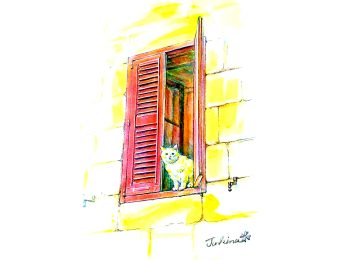 Cat at a red window